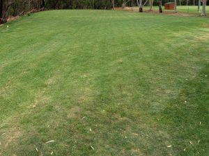 Blackwood FC First Mow